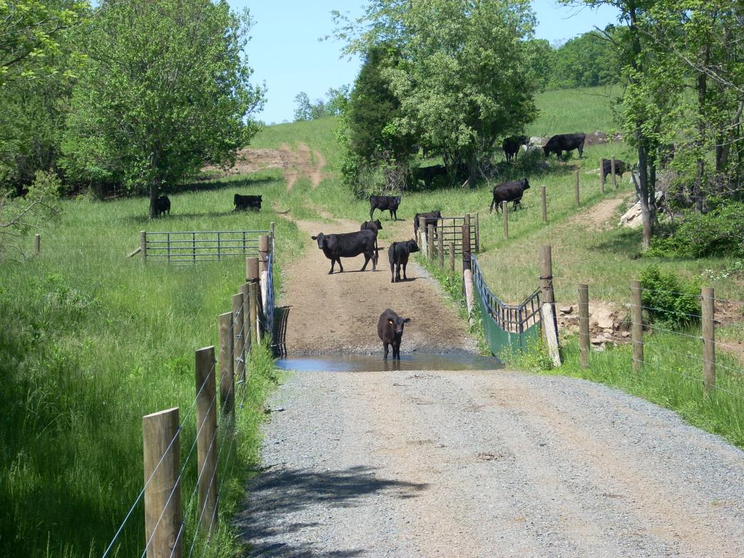 Image result for livestock exclusion fencing john marshall
