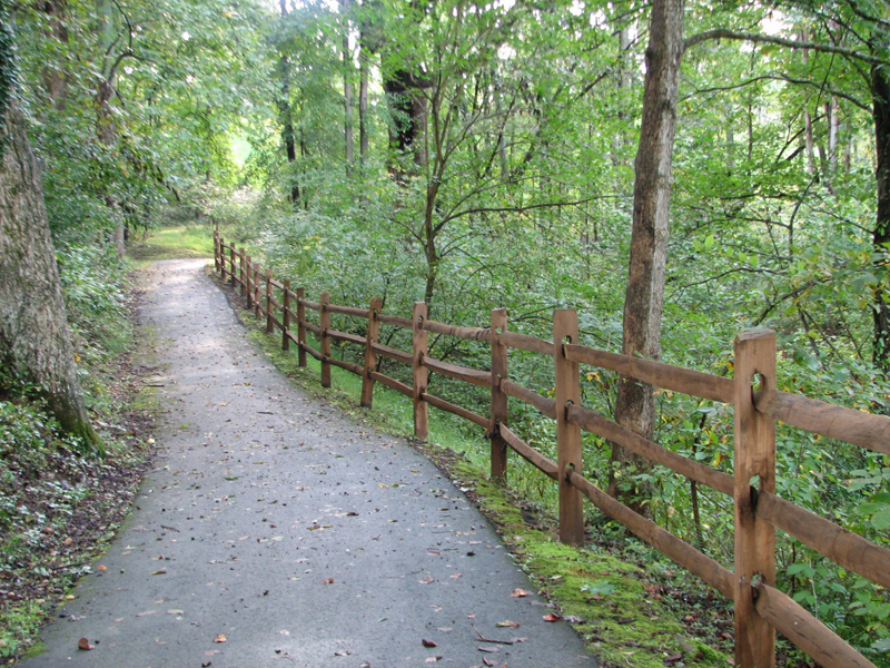 Wooded section of White's Mill Trail